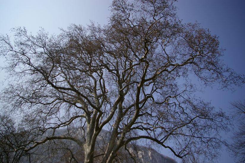 arbre hiver Parc du château de Sassenage