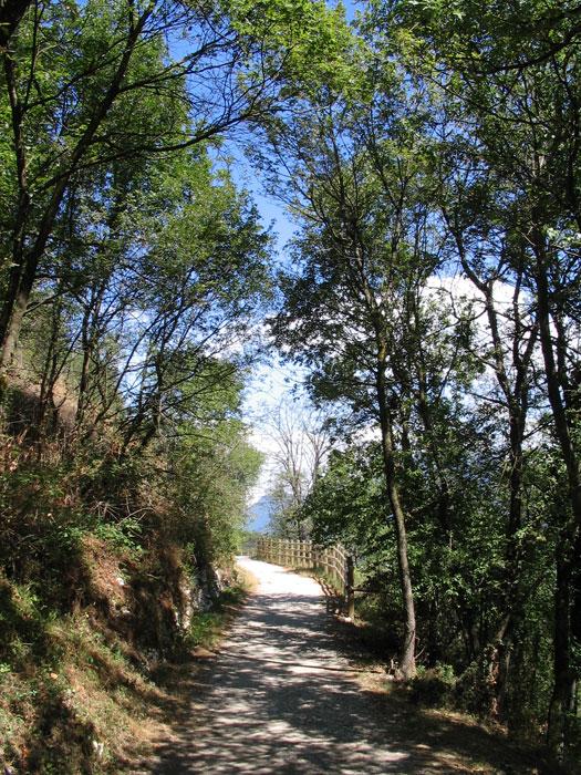 Bois Rolland