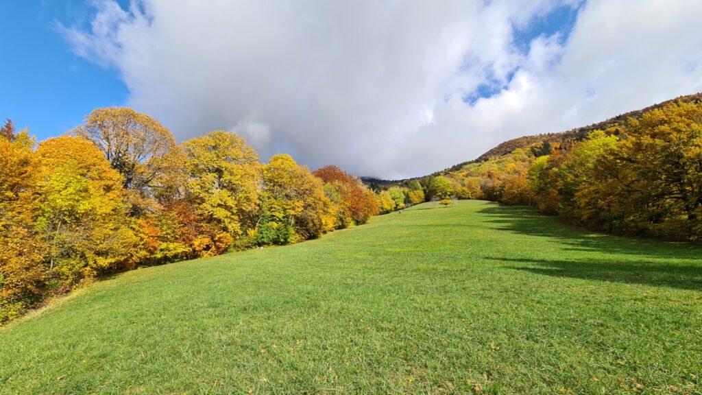 Photo de champ en Chartreuse l'automne