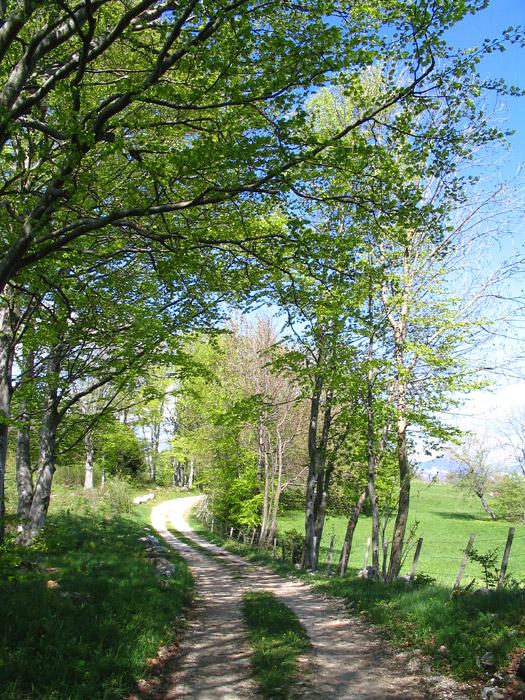 chemin hêtres et clôture