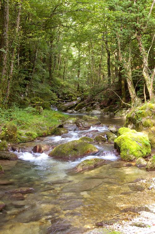 Rivière - Le Furon