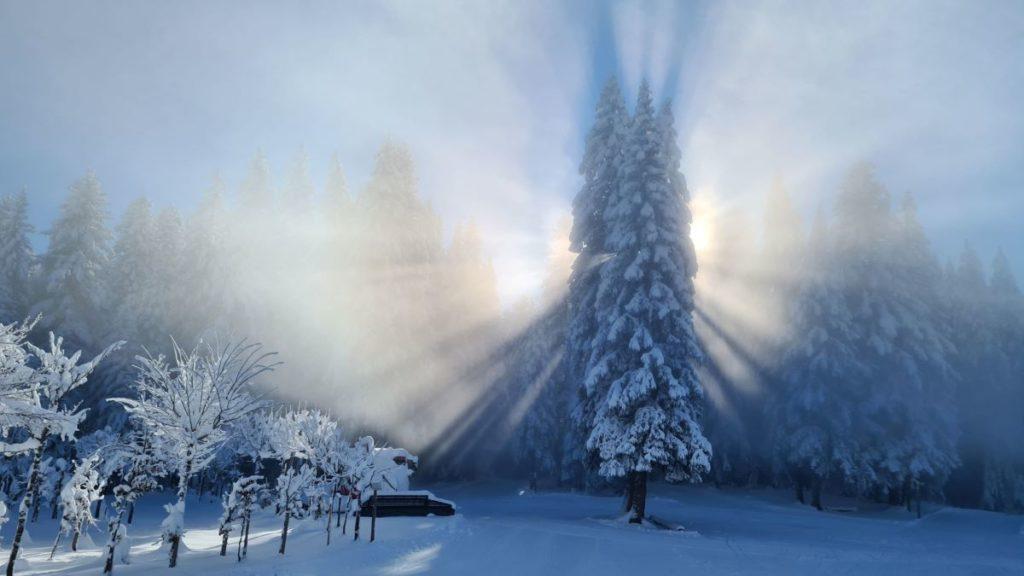 Photo paysage forêt neige