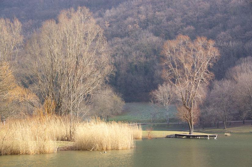 arbre et roselière en bord de lac