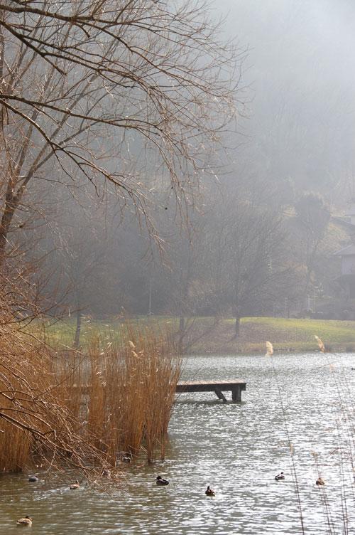 roselière et lac
