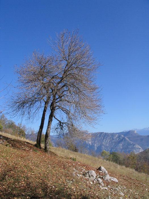 arbre fournel automne