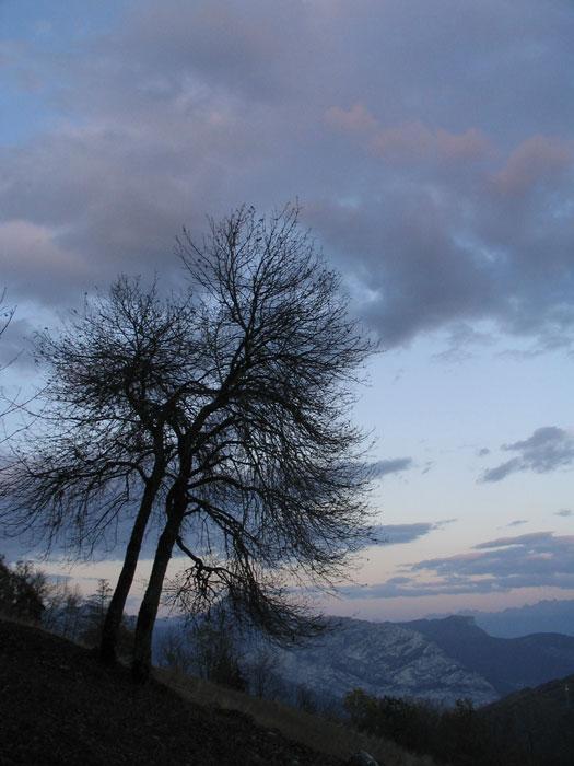arbre soirée