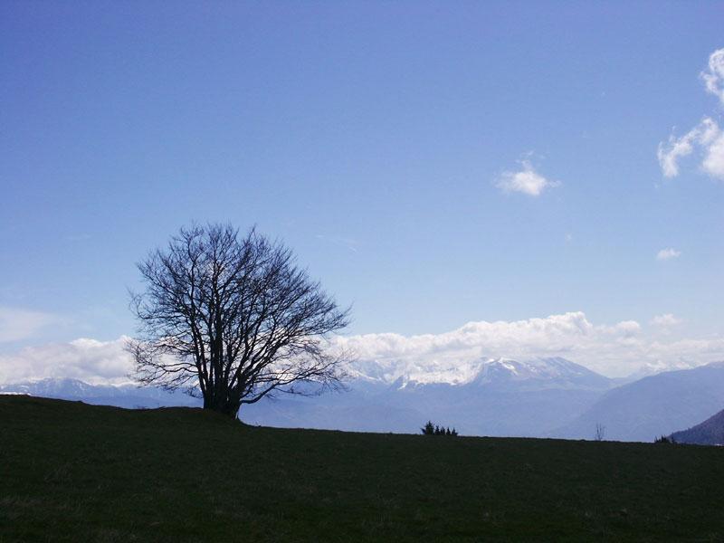arbre en silhouette