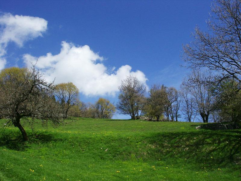 champs au printemps
